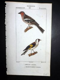 Turpin C1820 Hand Col Bird Print. Chaffinch & Goldfinch 44